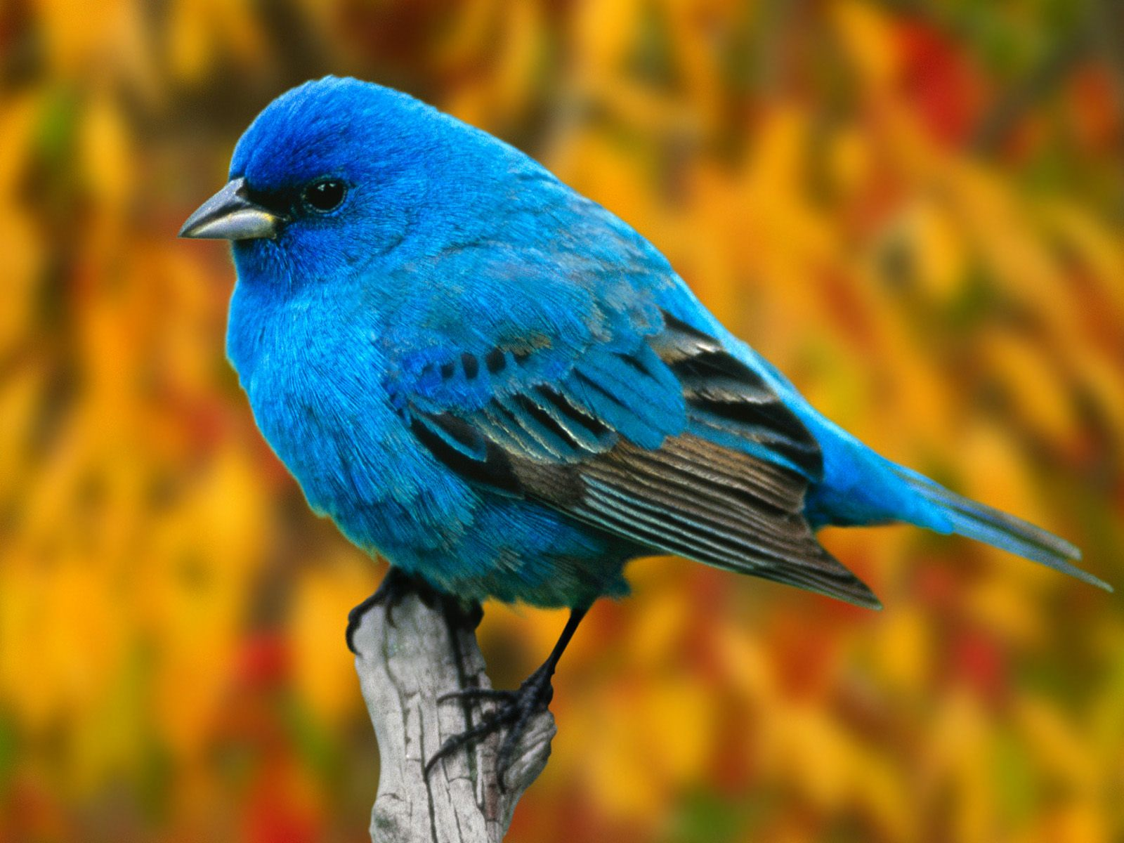 beautiful birds beautiful cool wallpapers