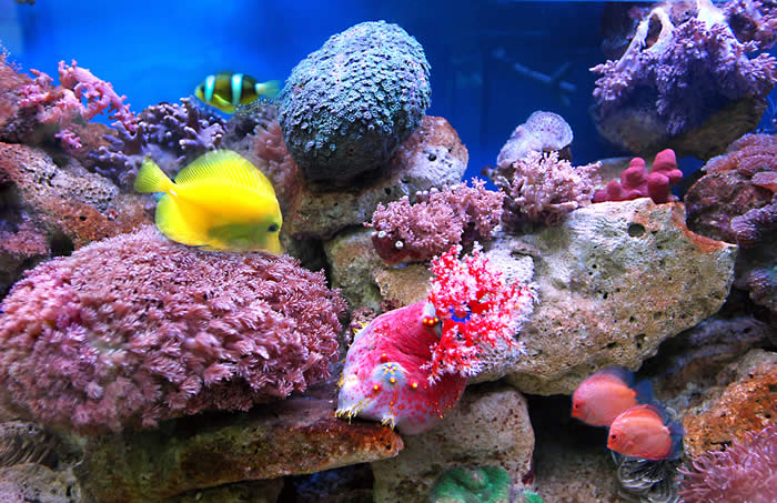 Sea life images beautiful cool wallpapers for Cool saltwater fish