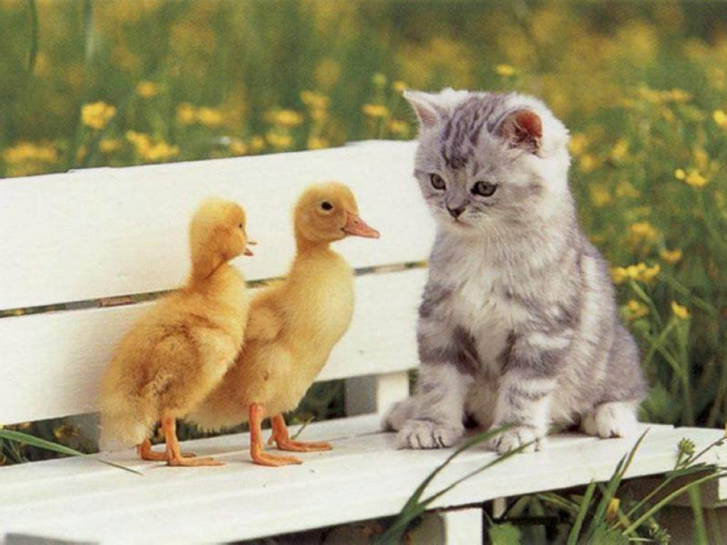 Cute cats wallpapers beautiful cool wallpapers cute cats wallpapers voltagebd Gallery