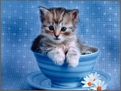 Cute Cats Images on Cute Cats Wallpapers Beautiful Cool Wallpapers