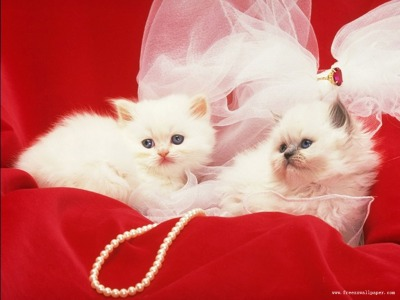Beautiful Cats Images