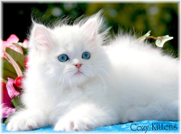 cute cats wallpapers beautiful cool wallpapers