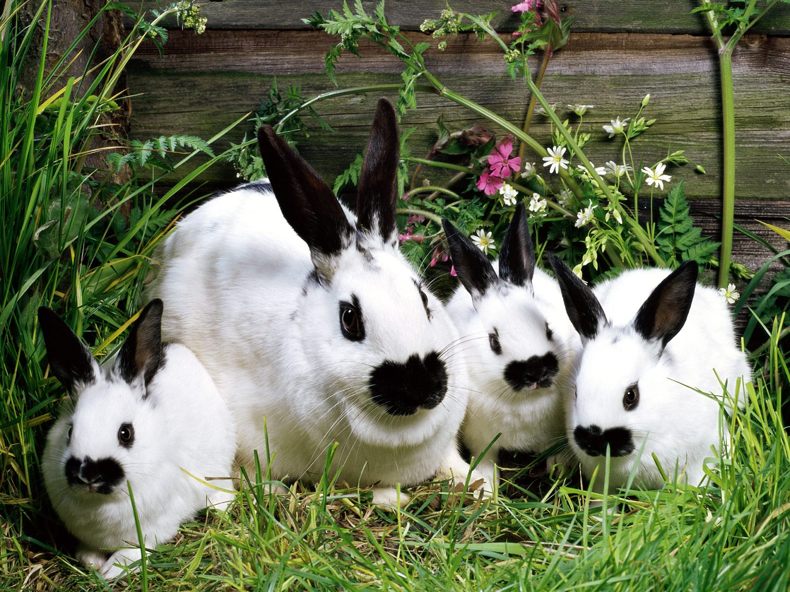 beautiful rabbits pictures beautiful cool wallpapers