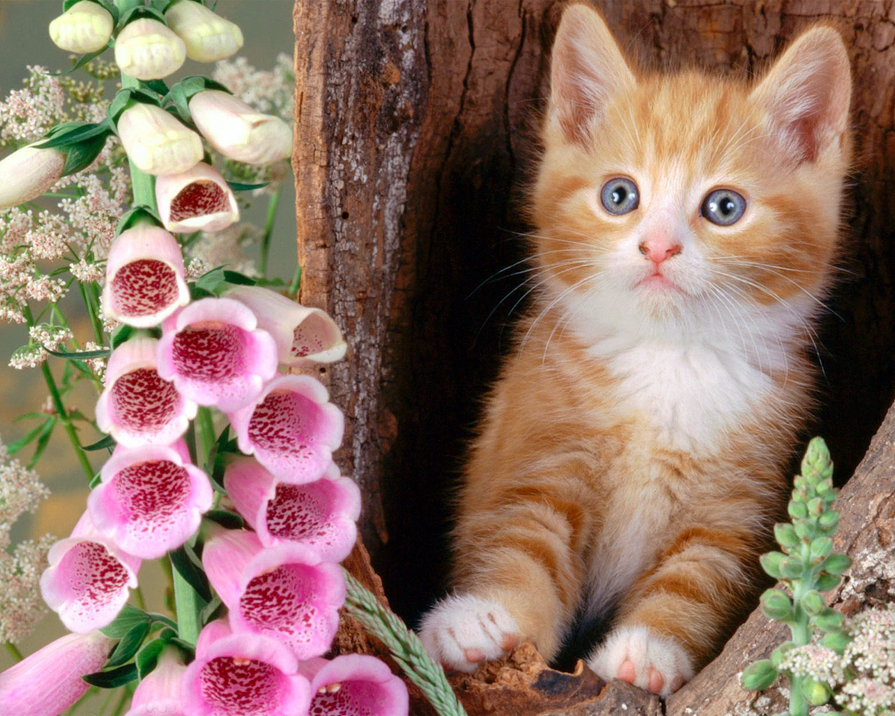 Collection Beautiful Cat Wallpaper Pic