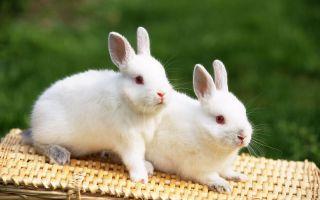 Beautiful Rabbits Wallpapers
