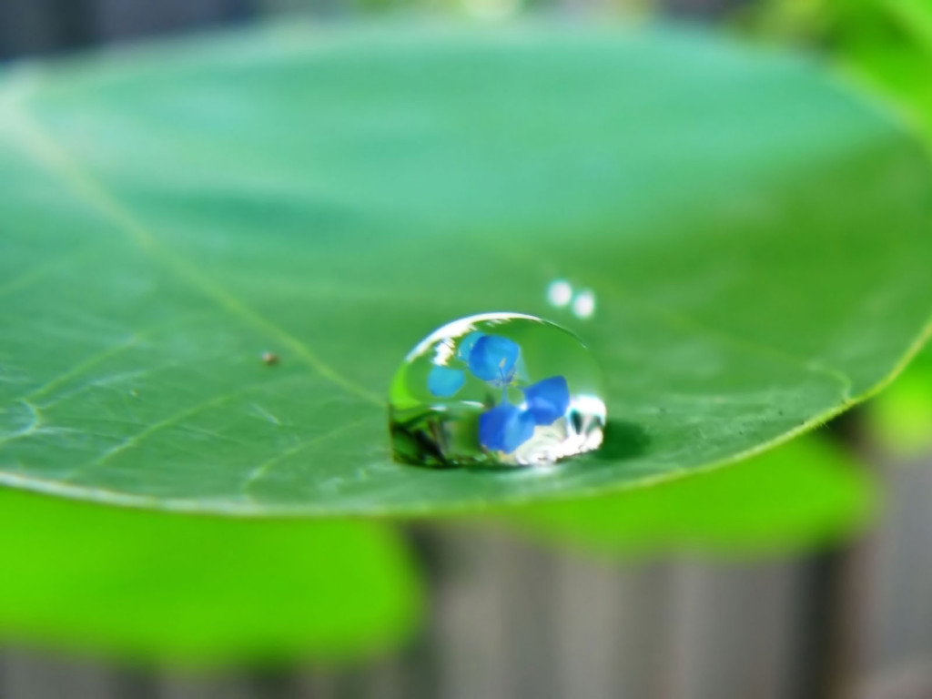 water drop wallpapers beautiful cool wallpapers