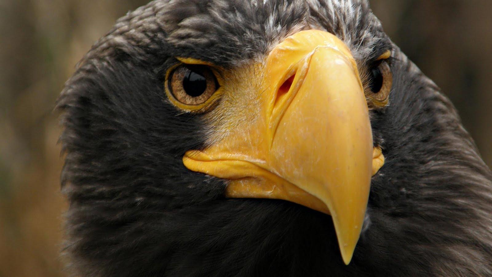 Wonderful Wallpaper Horse Eagle - 16950-desktop-wallpapers-eagle  Picture_52616.jpg