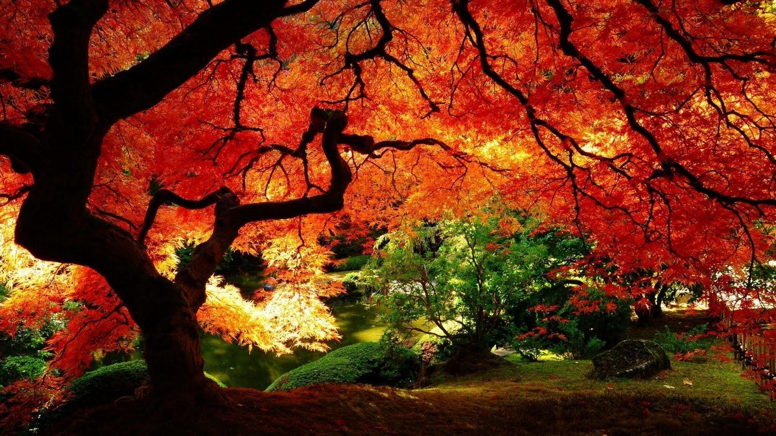 Wallpaper Hd Tree