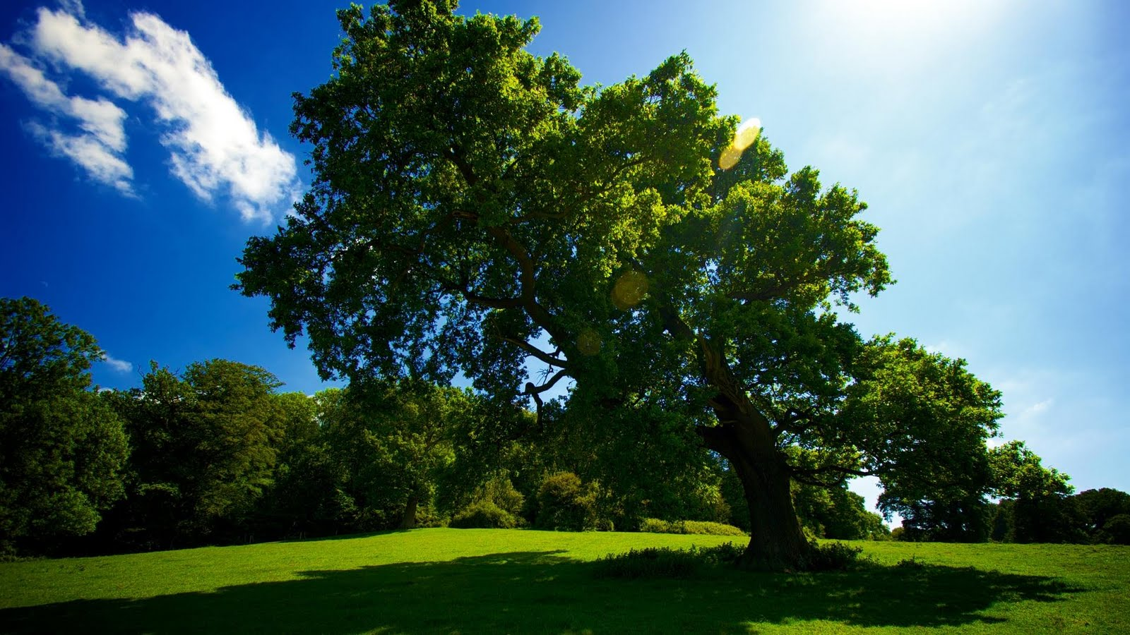 tree hd wallpapers - photo #2