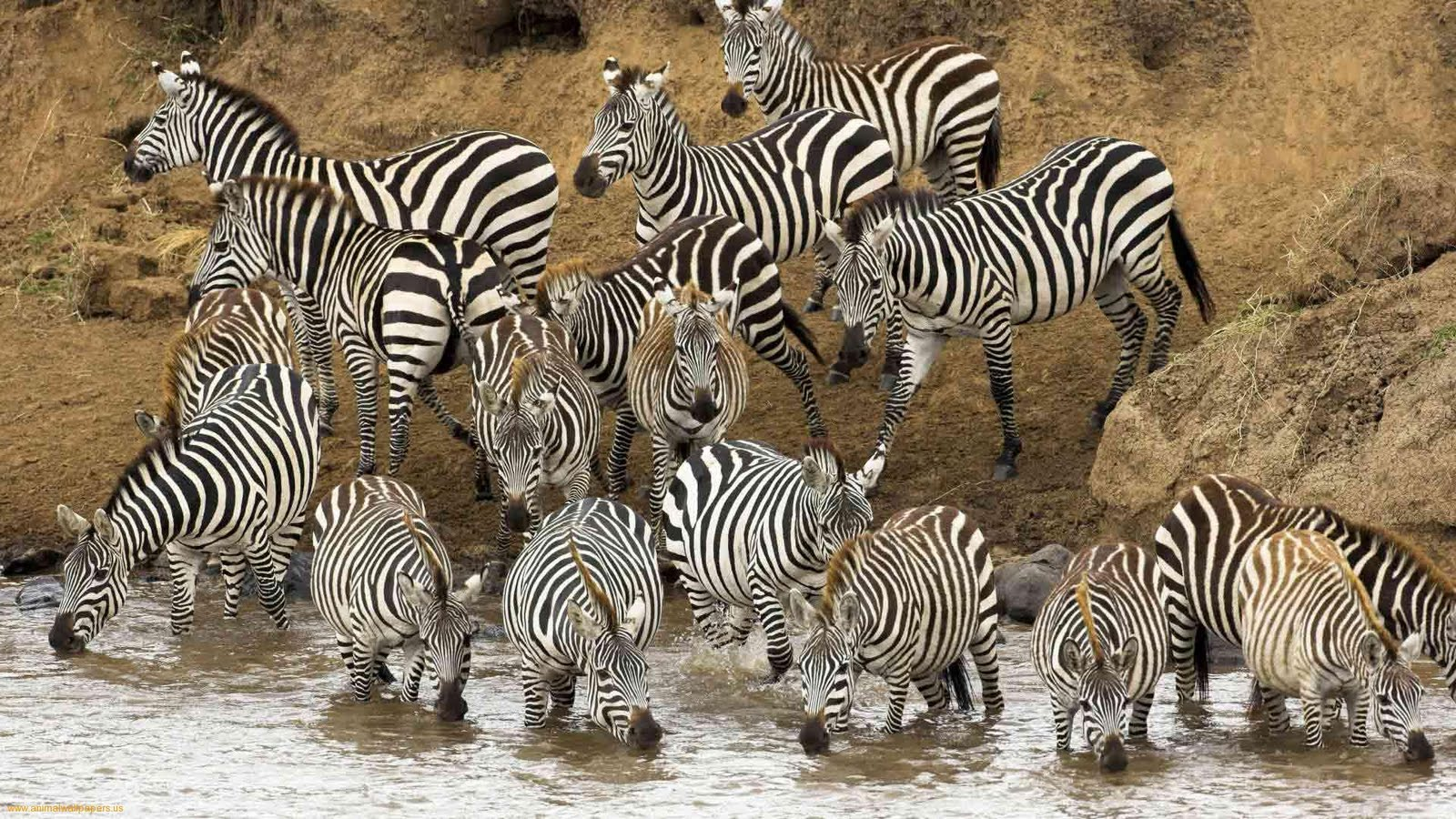 Images of wild animals