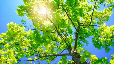 HD Tree Wallpapers