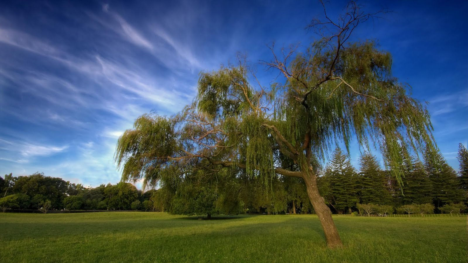 tree hd wallpapers-#5