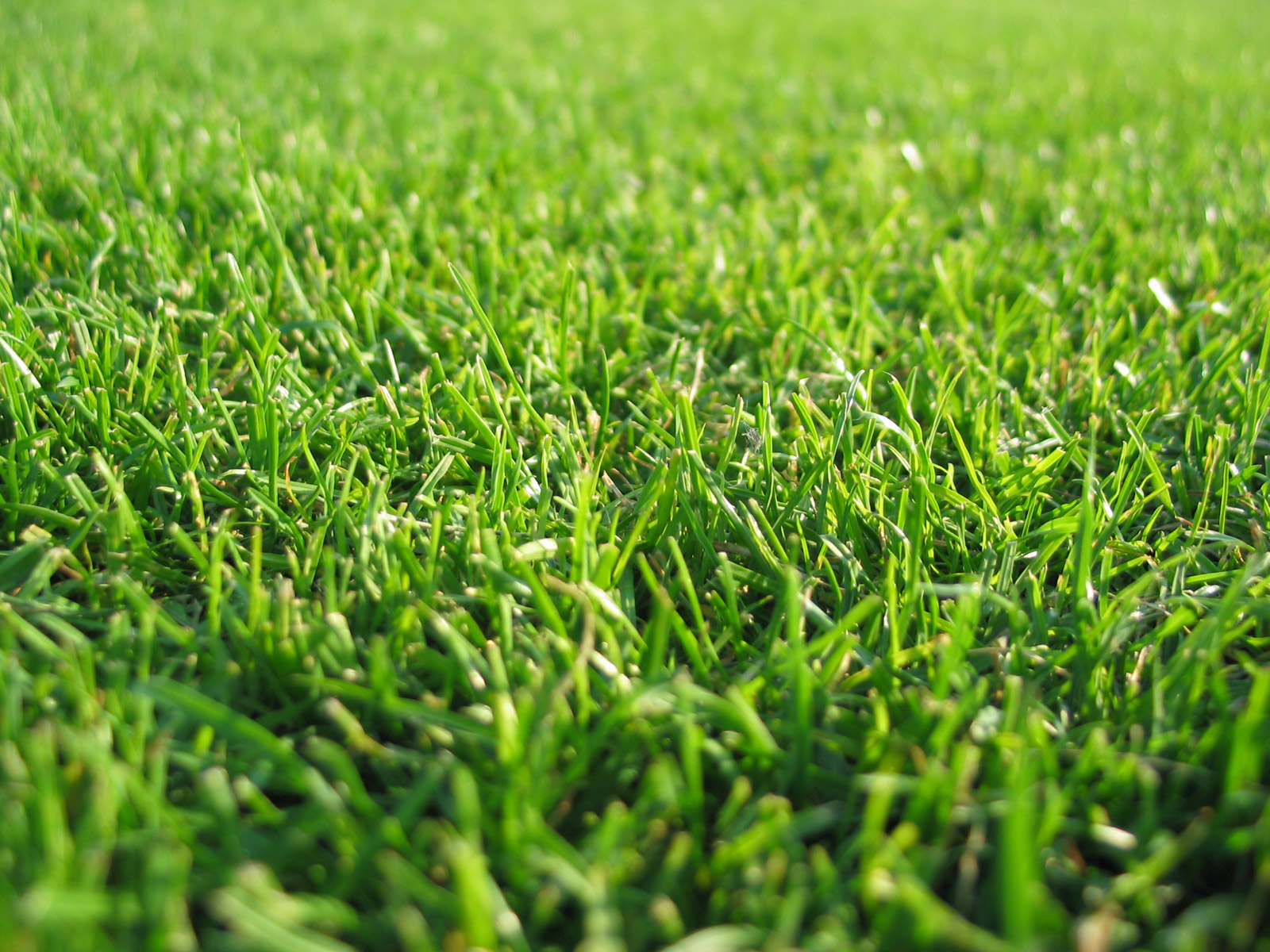 Grass wallpapers hd beautiful cool wallpapers for Pretty grass