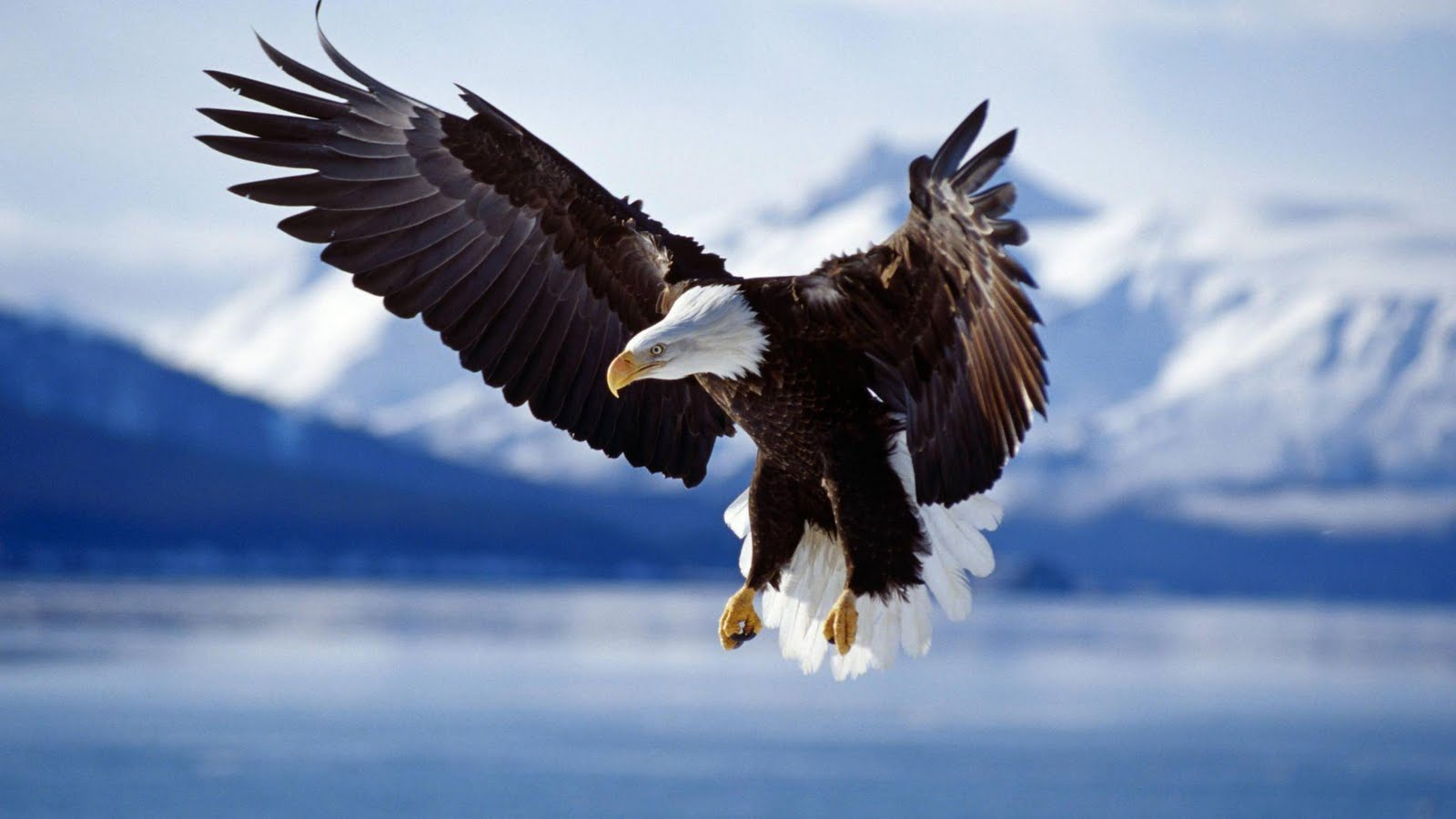 Must see Wallpaper Horse Eagle - wallpaper_eagle  Photograph_18522.jpg