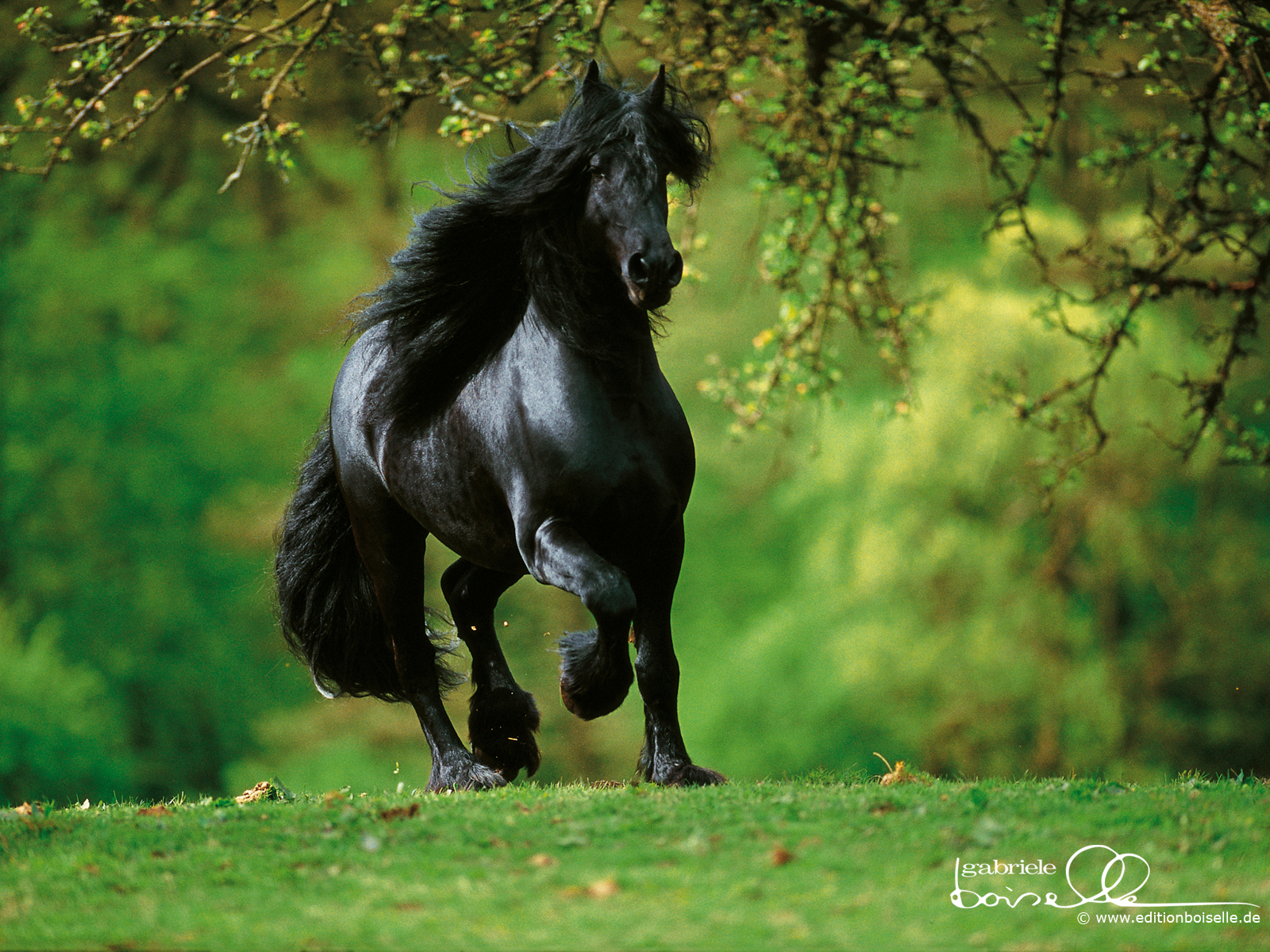 Best Wallpaper Horse Dark Brown - the-best-top-desktop-horse-wallpapers-13  Graphic_715132.jpg