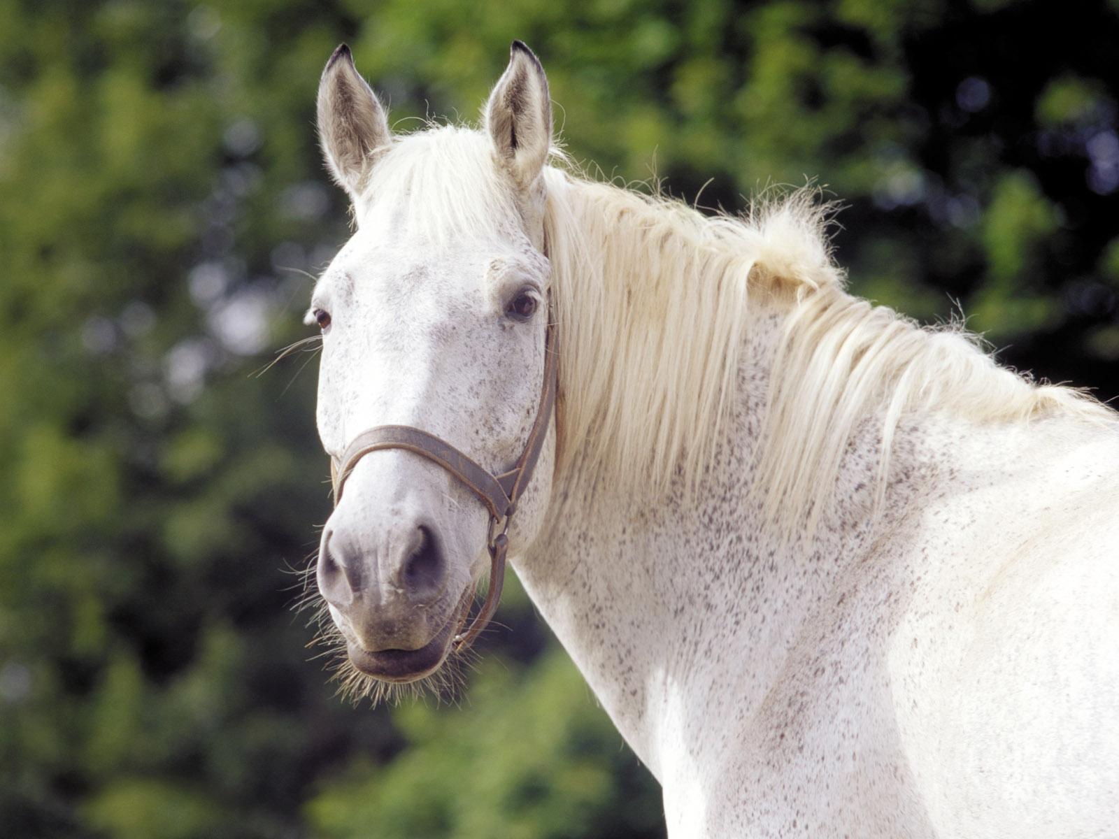 HD Horses Wallpapers