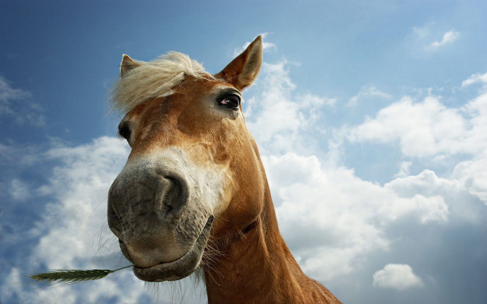 Horse Wallpapers|HD Horses Wallpapers | Beautiful Cool ... Pictures Of Horses