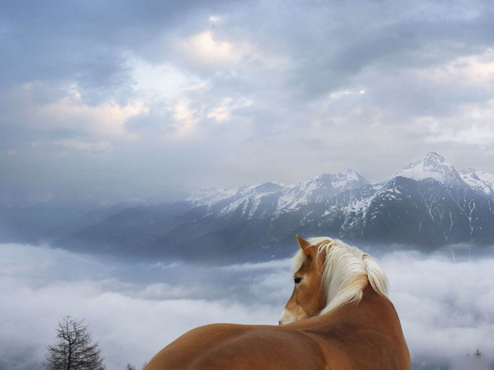island mountain horse wallpaper - photo #19