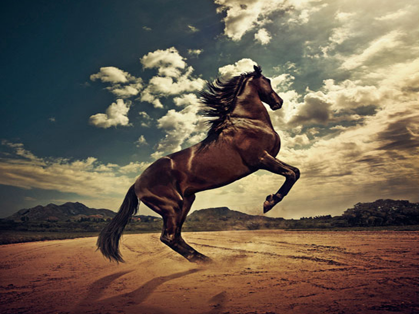 Must see Wallpaper Horse Desert - the-best-top-desktop-horse-wallpapers-25  Pic_879372.jpg