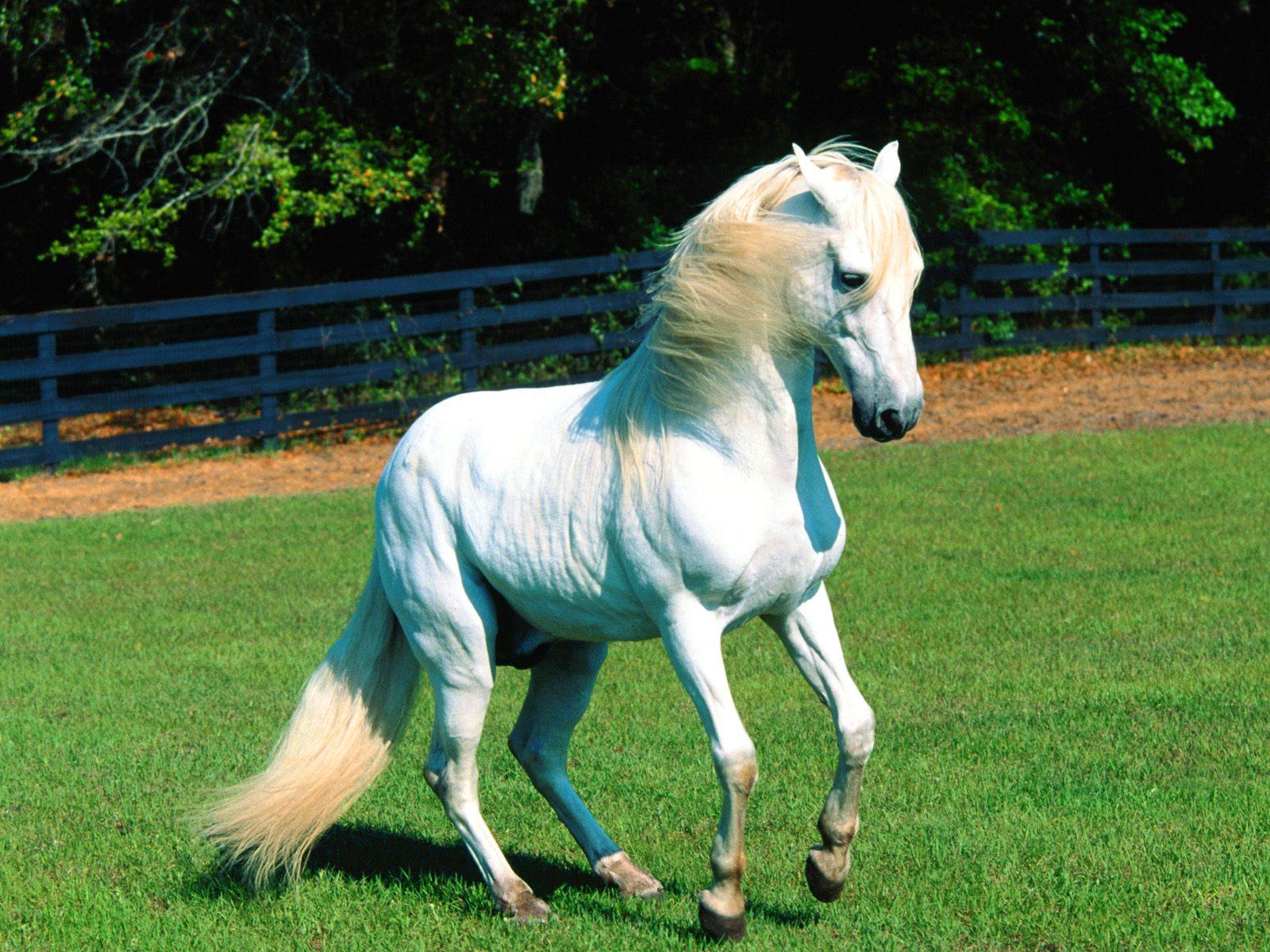 Simple Wallpaper Horse Lightning - the-best-top-desktop-horse-wallpapers-3  Photograph_838995.jpg