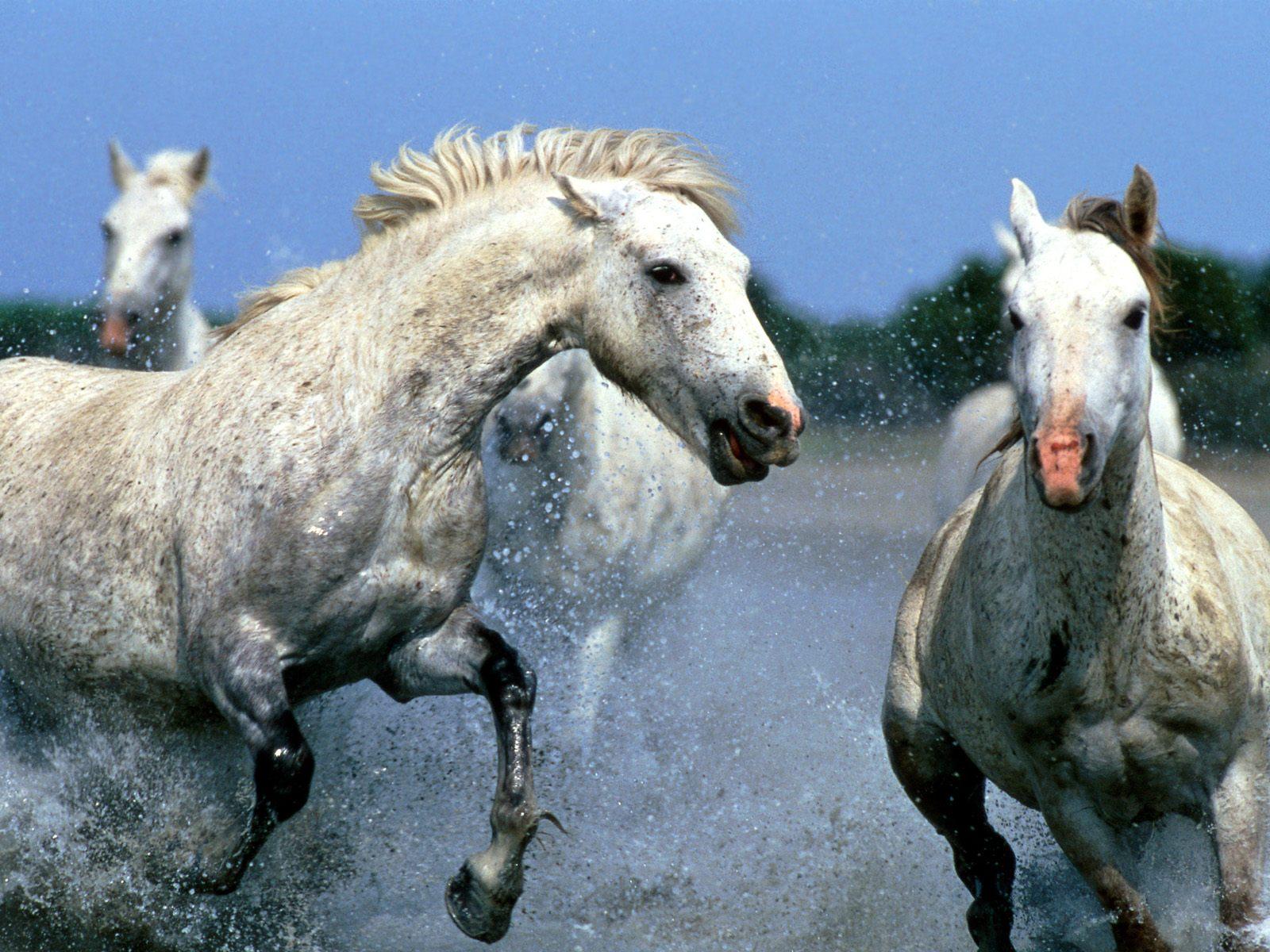 Best Wallpaper Horse Water - the-best-top-desktop-horse-wallpapers-30  You Should Have_705795.jpg