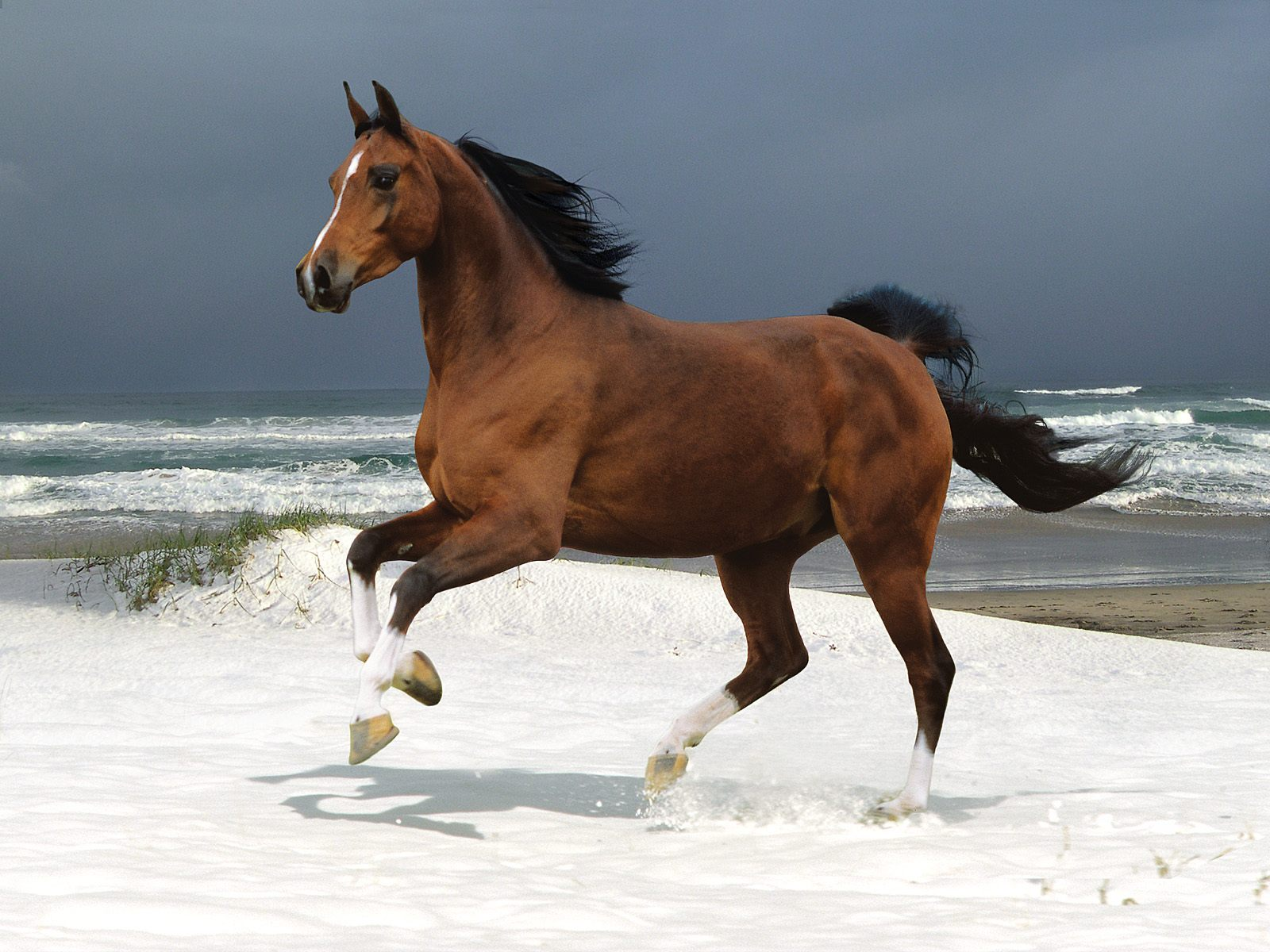 Horse Horses Beautiful Cool