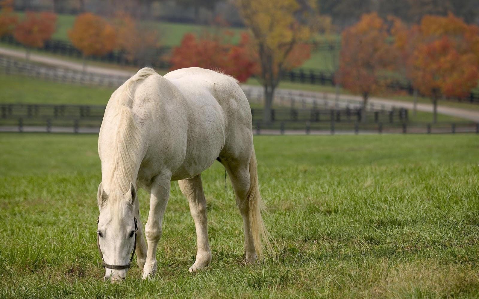 Best Wallpaper Horse Green - the-best-top-desktop-horse-wallpapers-38  Picture_94393.jpg
