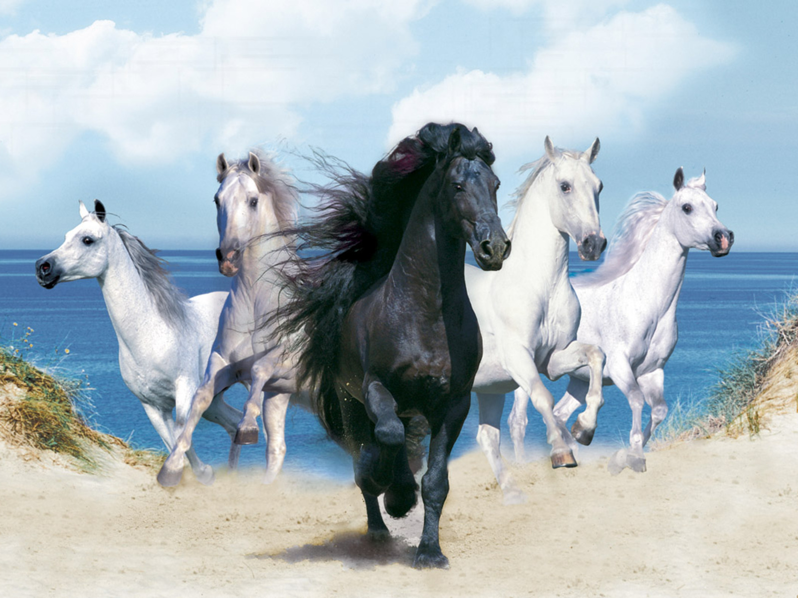 Best Wallpaper Horse Dark Brown - the-best-top-desktop-horse-wallpapers-42  Graphic_715132.jpg