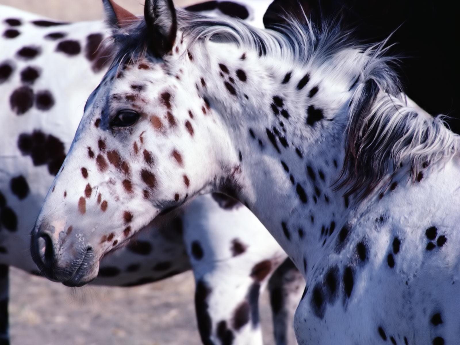 Must see Wallpaper Horse Wolf - the-best-top-desktop-horse-wallpapers-5  Pic_804316.jpeg